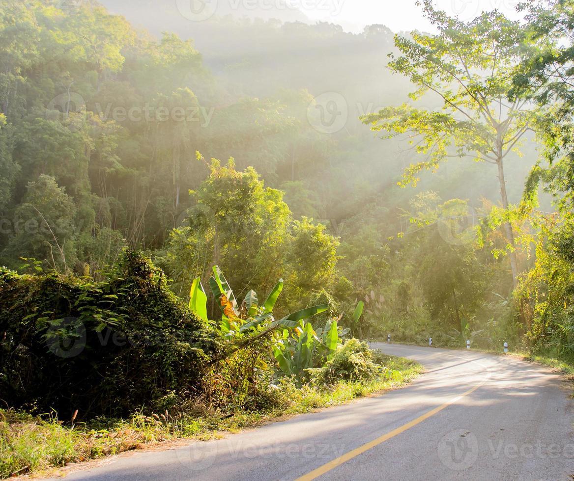 floresta e estrada com raio de sol foto