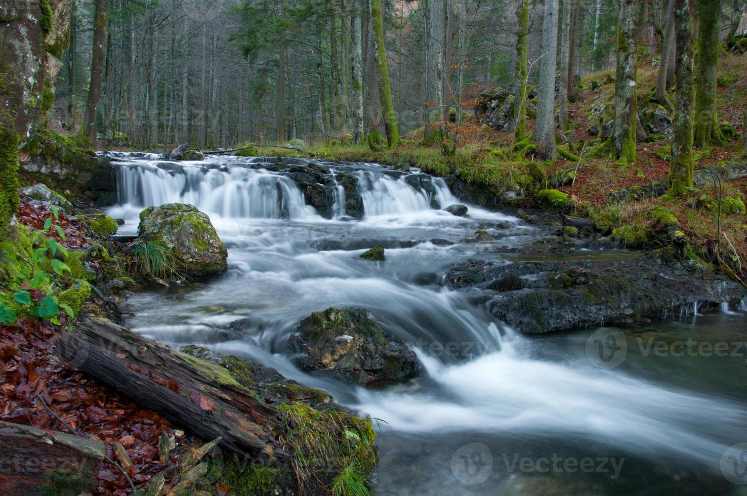 riacho na floresta outonal foto