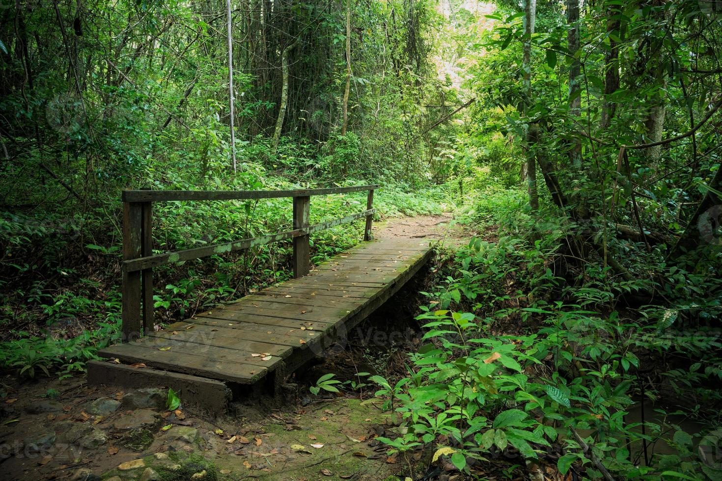 ponte de madeira na floresta tropical foto