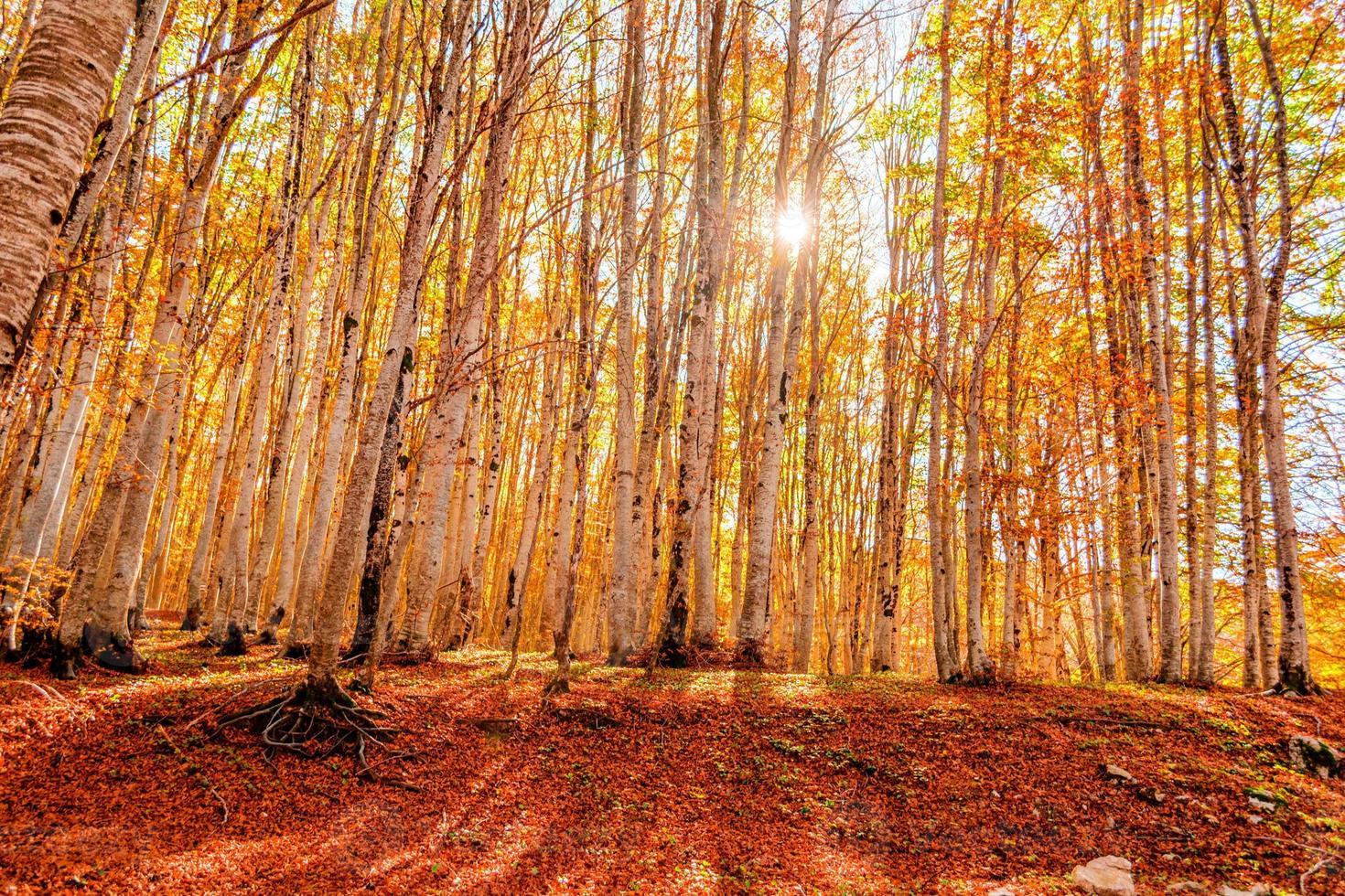 floresta no outono em montenegro foto