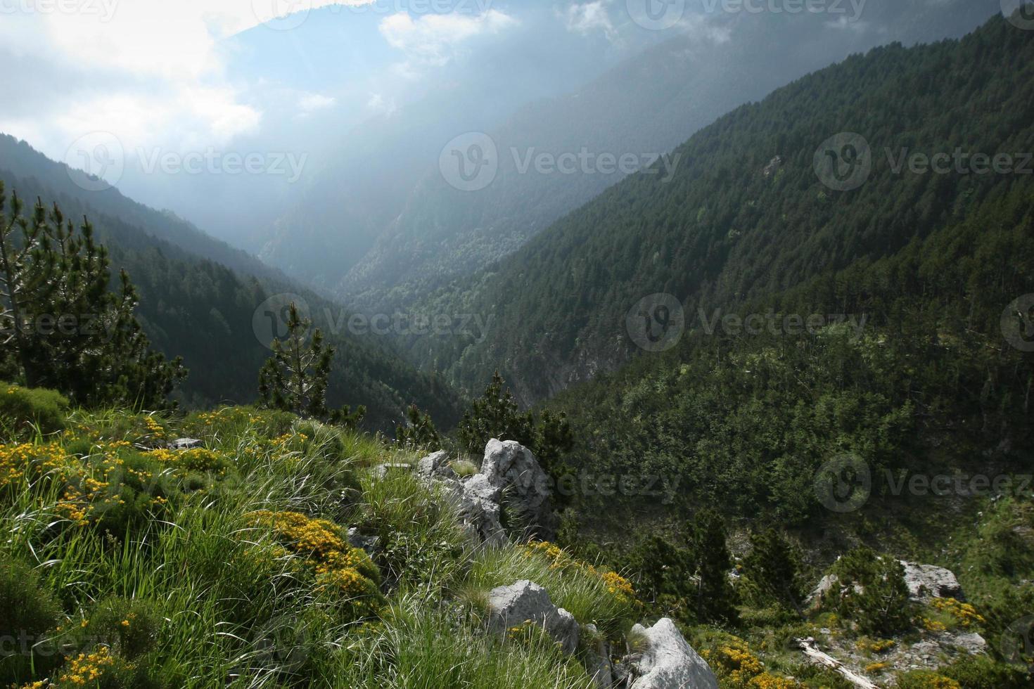 cena da floresta em olympus mountain-greece foto