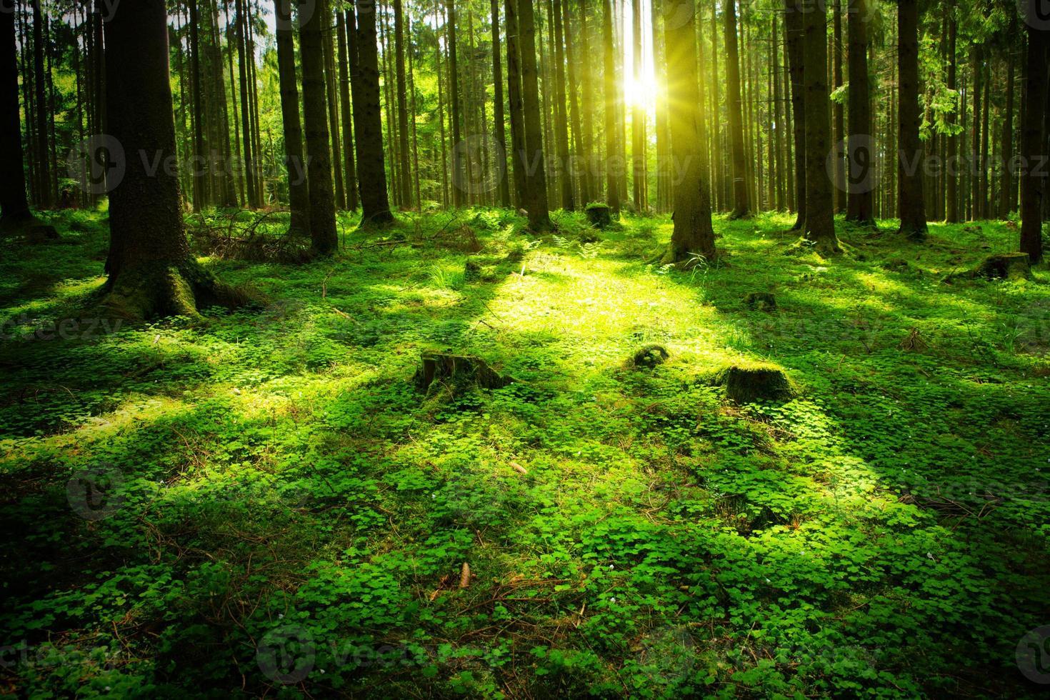 floresta de verão com sol e sombra foto