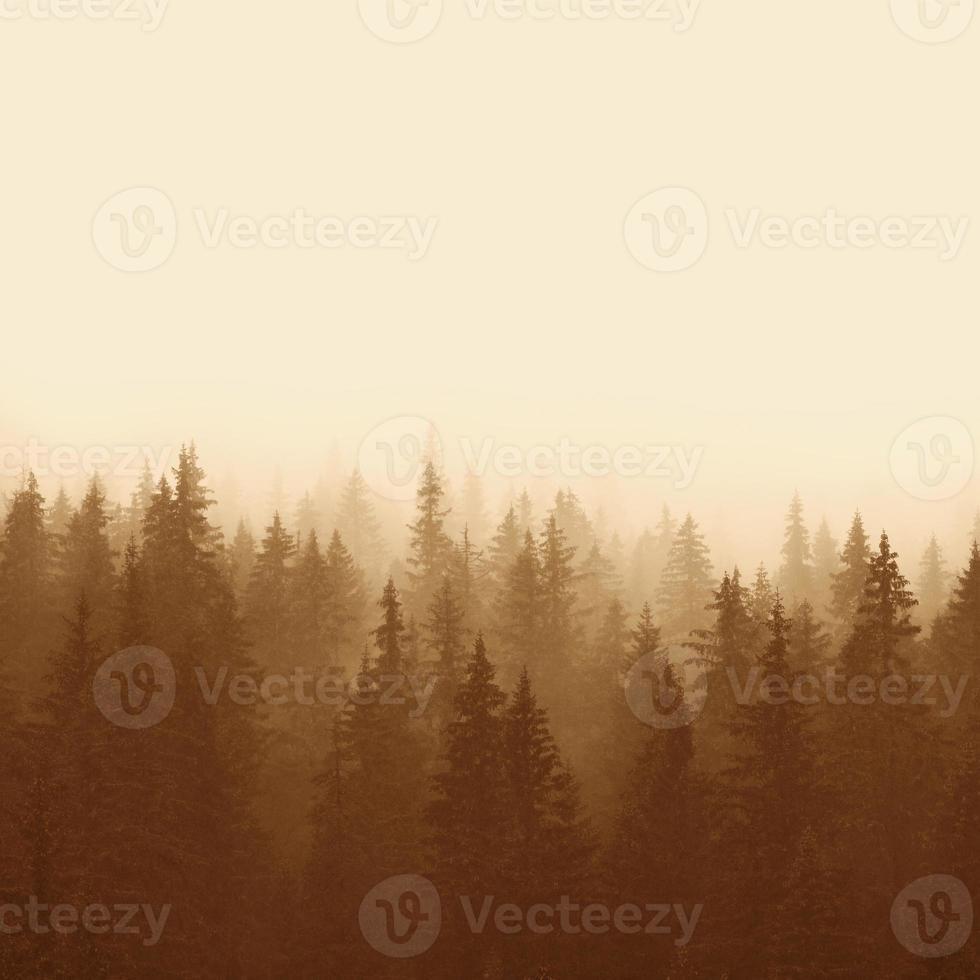 paisagem em sépia - floresta de pinheiros foto