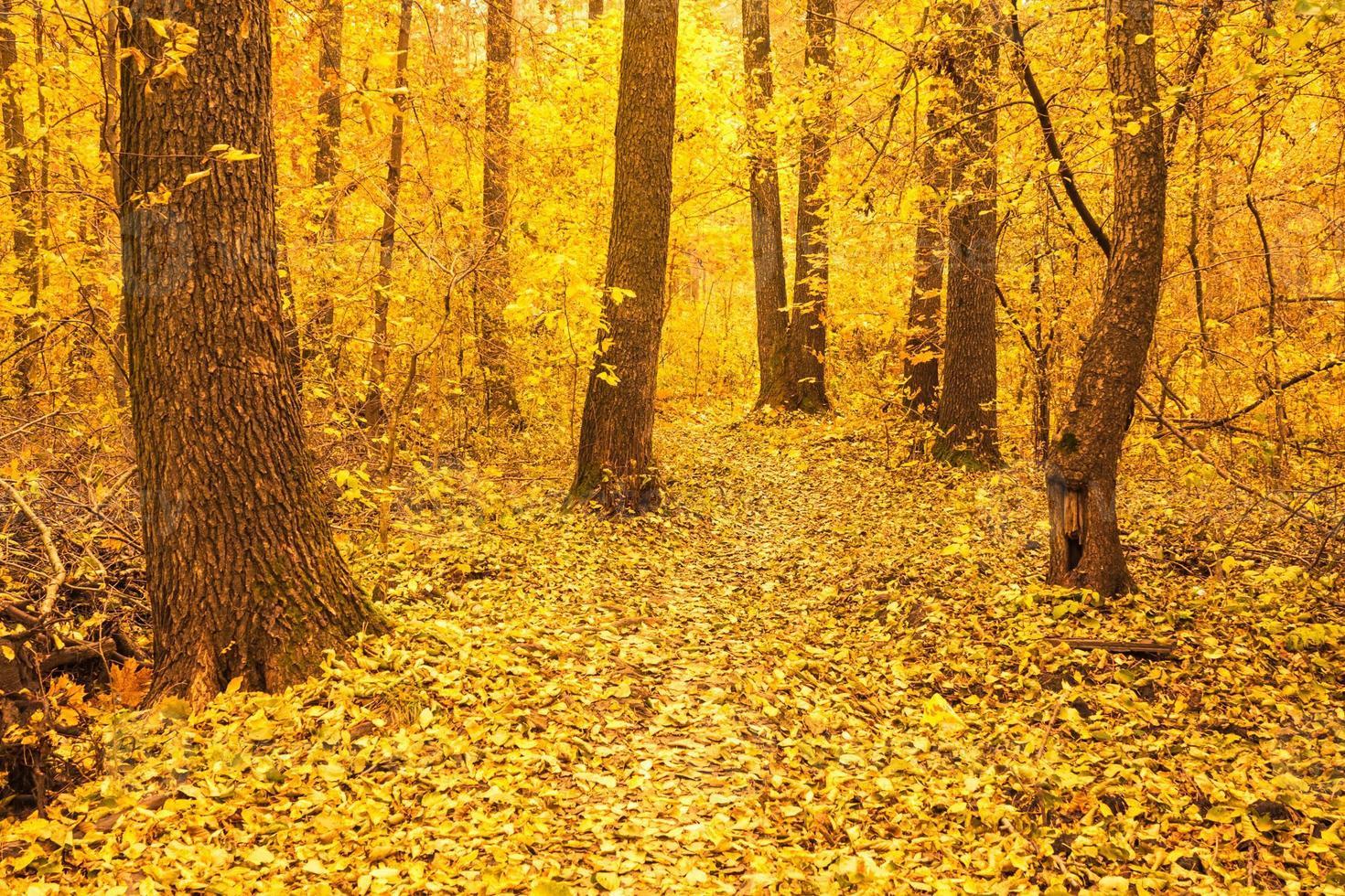 árvores de outono coloridas na floresta foto