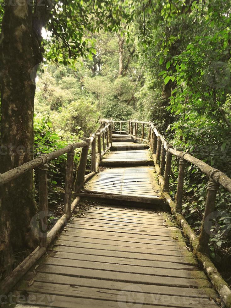 a passarela de madeira na floresta foto