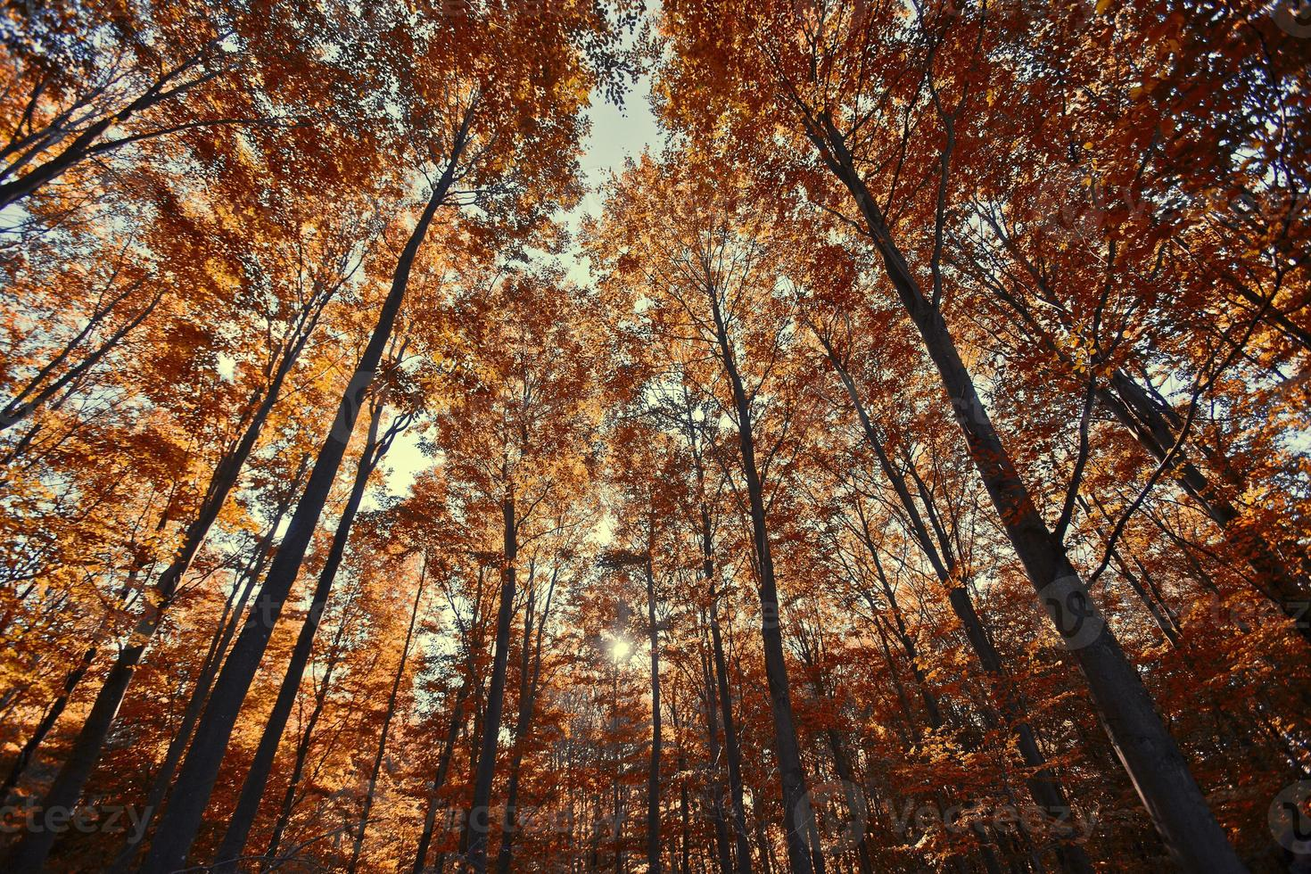 floresta outono, fundo colorido abstrato foto