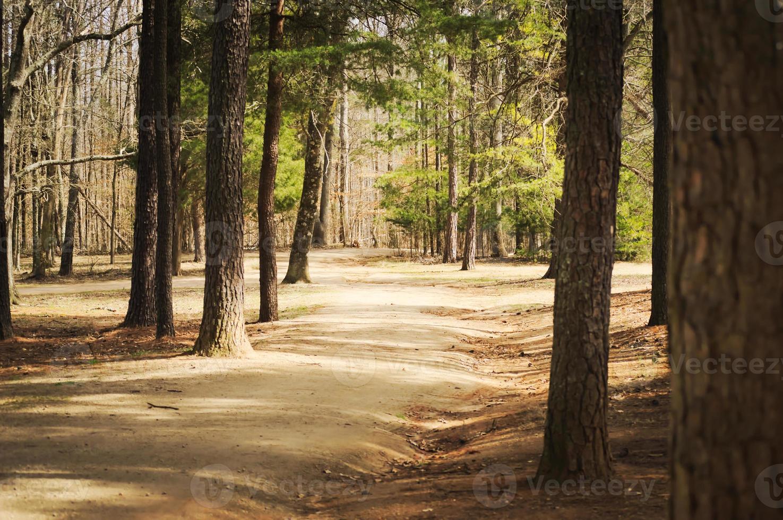 caminho brilhante dividido pela floresta foto