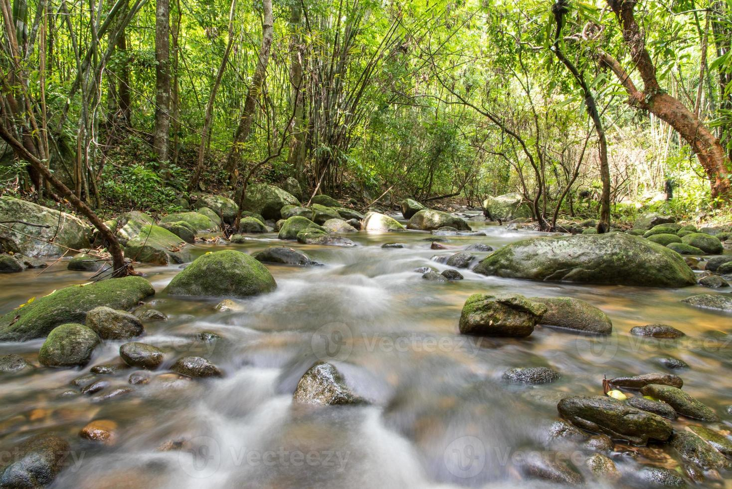 rio nas profundezas da floresta de montanha. foto