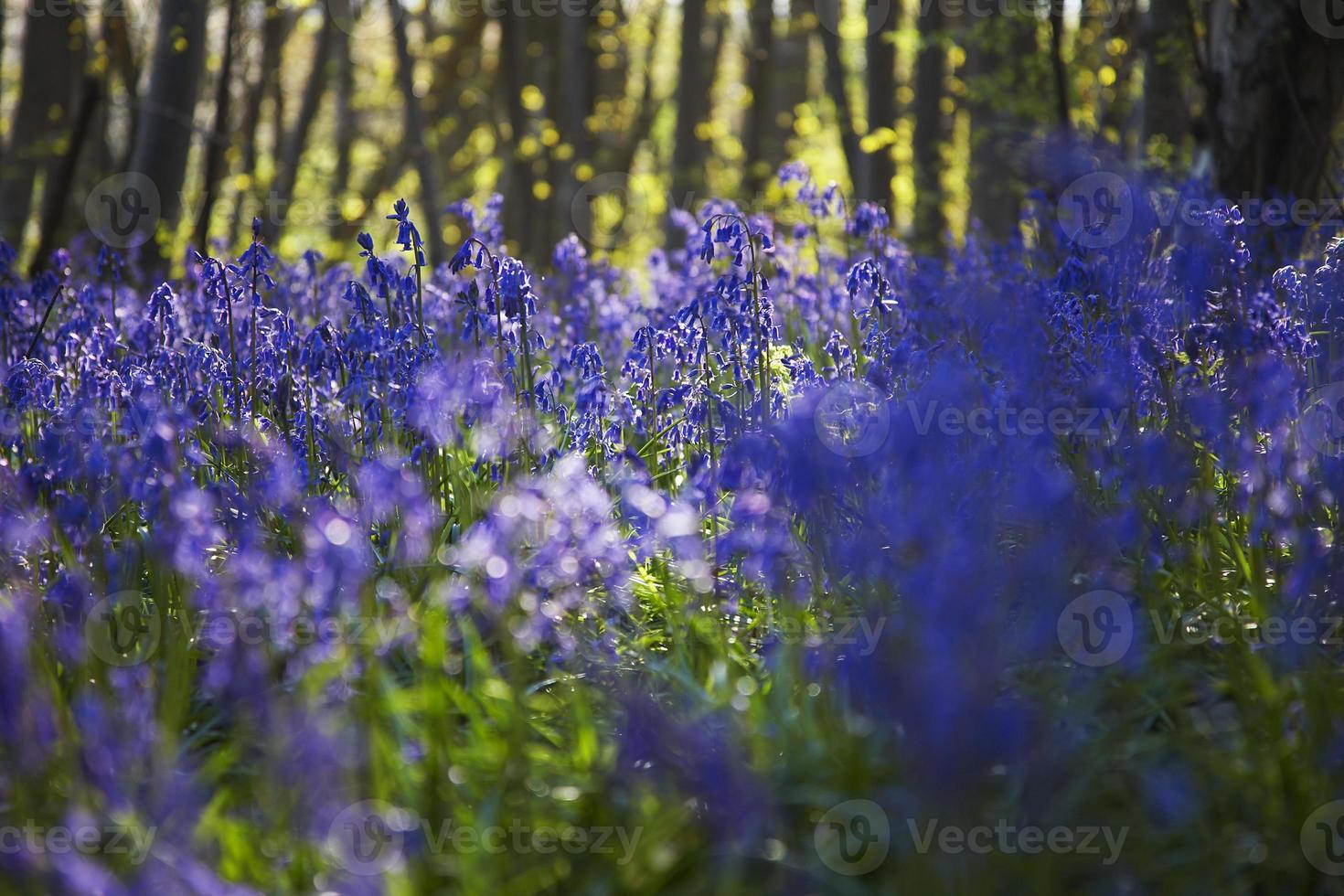 árvores e flores em uma floresta foto