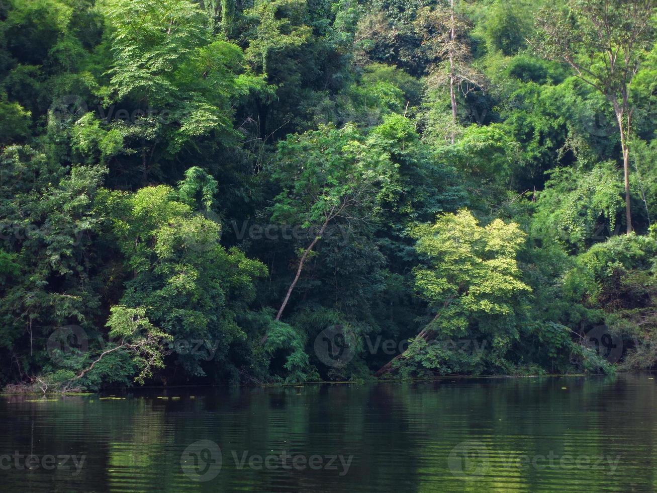 árvore verde na floresta e rio foto