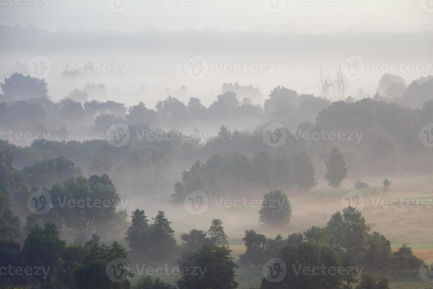 floresta e prado no nevoeiro foto