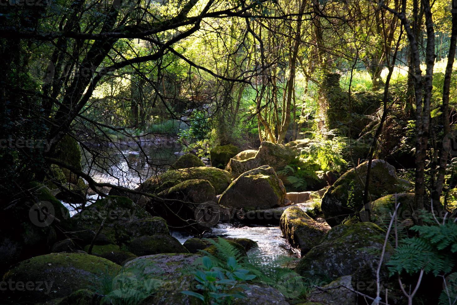 paisagem florestal com pedras cobertas de musgo e árvores foto