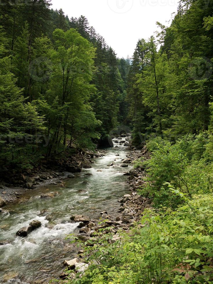 rio rápido correndo pela floresta foto