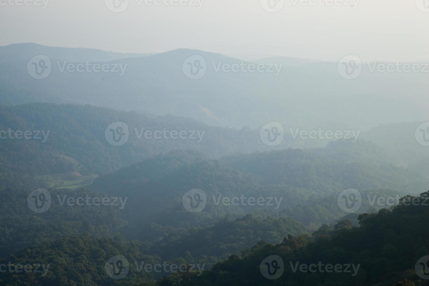 floresta de montanha foto
