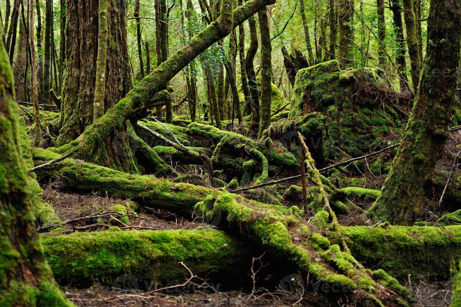 floresta de musgo, foto
