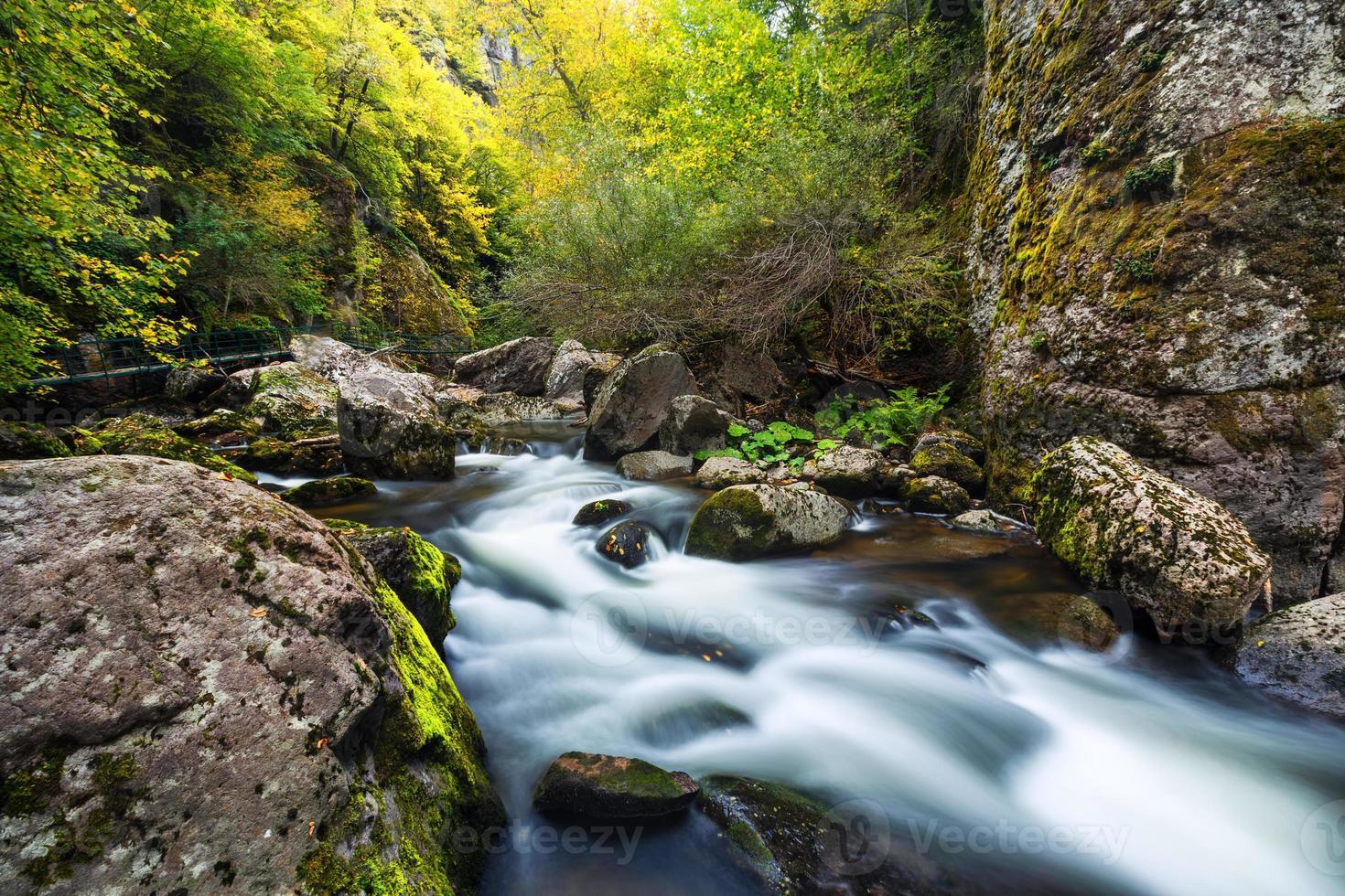 rio da montanha fluindo pela floresta verde foto