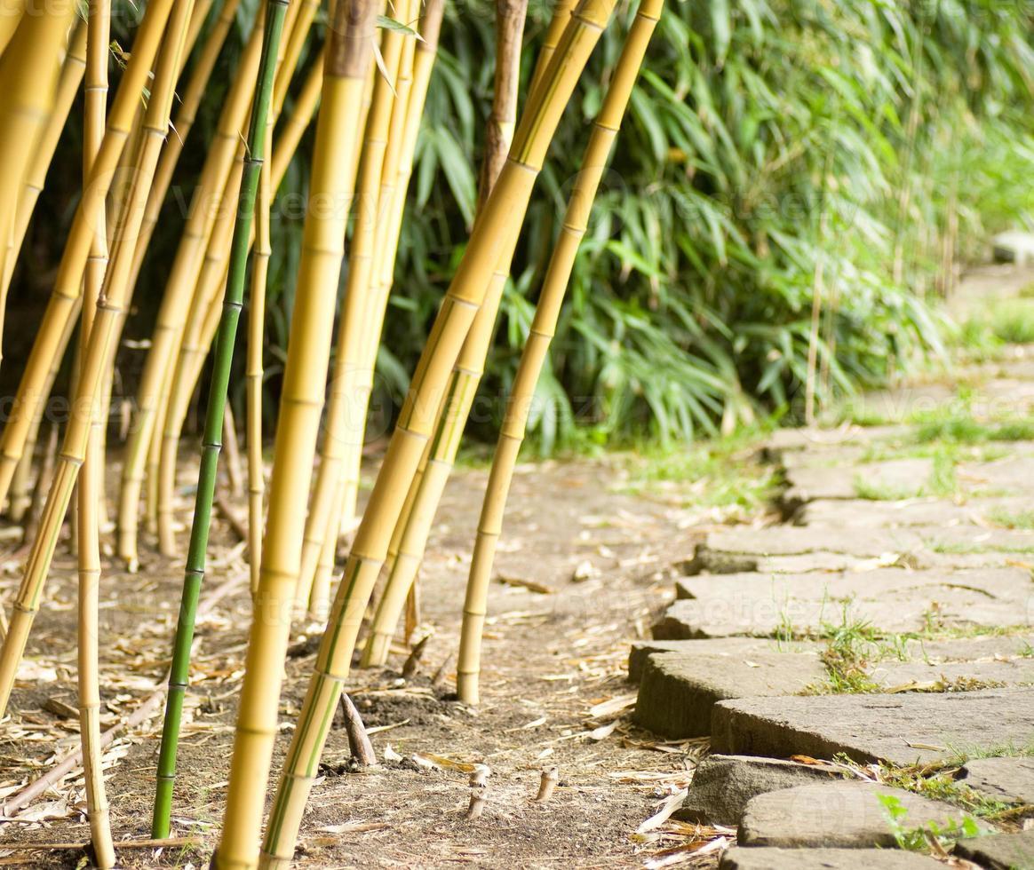 floresta de bambu verde foto