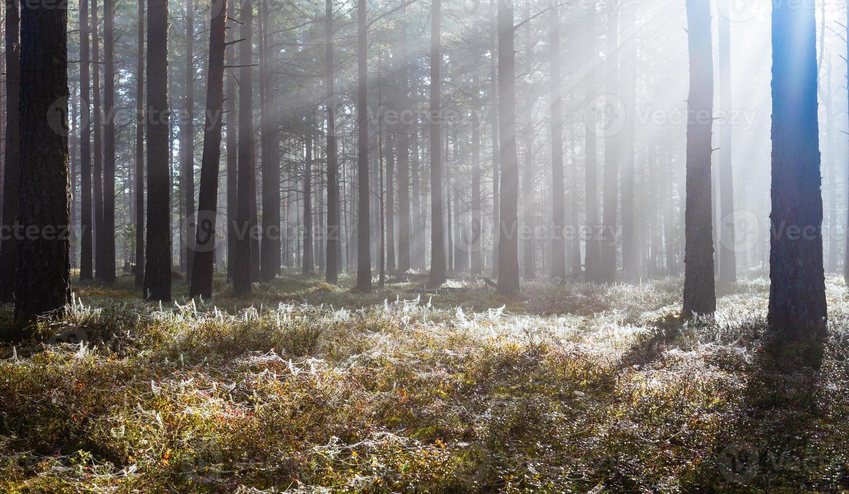 manhã na floresta foto
