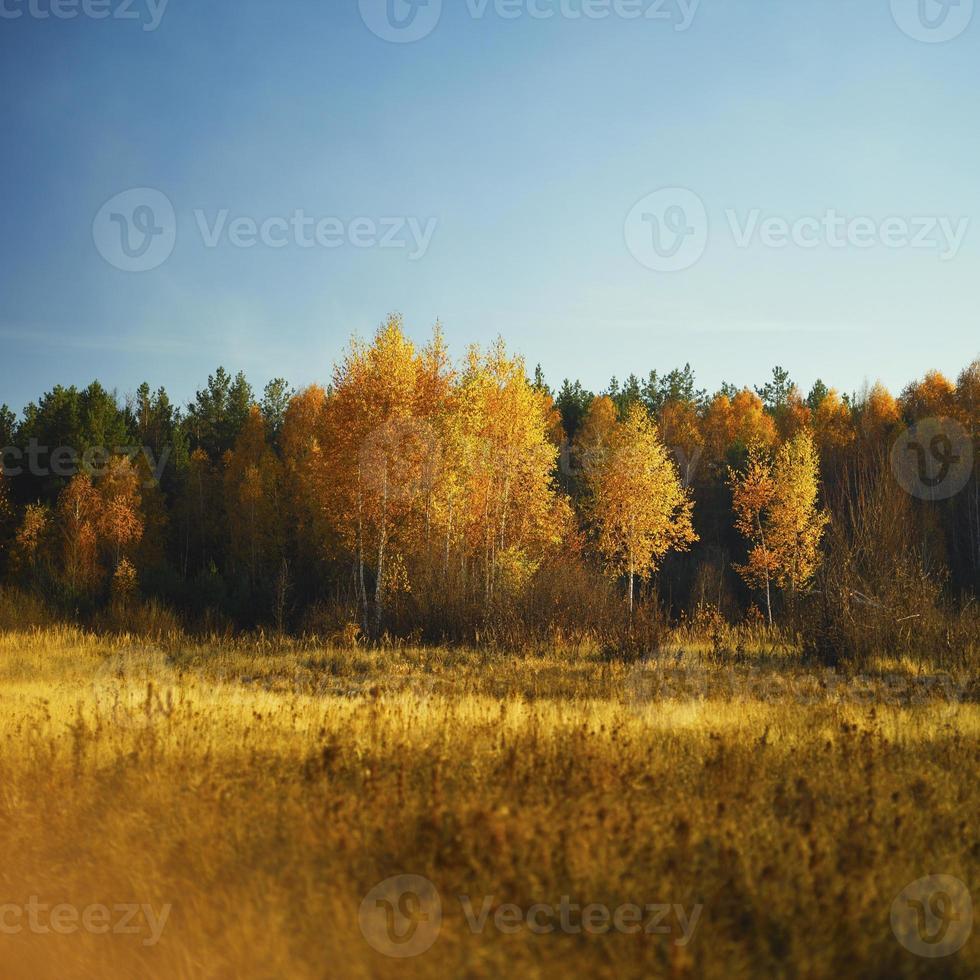 floresta de outono e campo foto