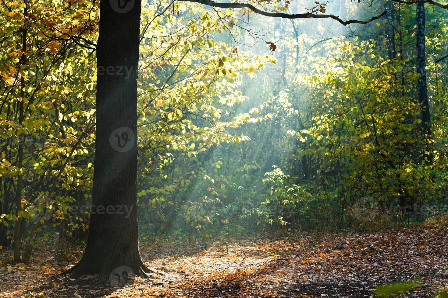 raios de sol iluminaram clareira na floresta de outono foto