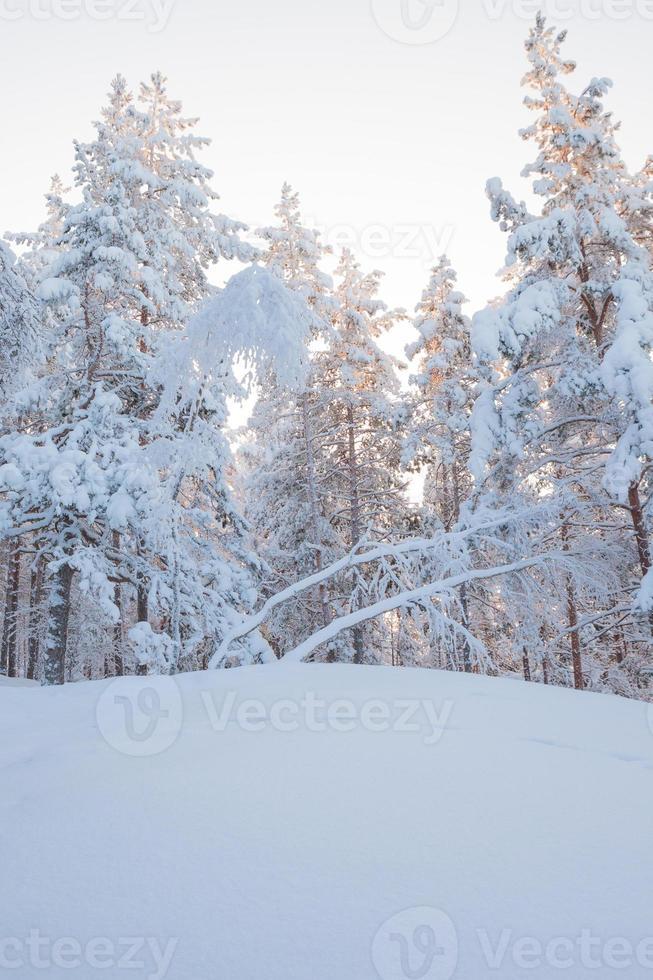 árvores da floresta de inverno cobertas de neve foto