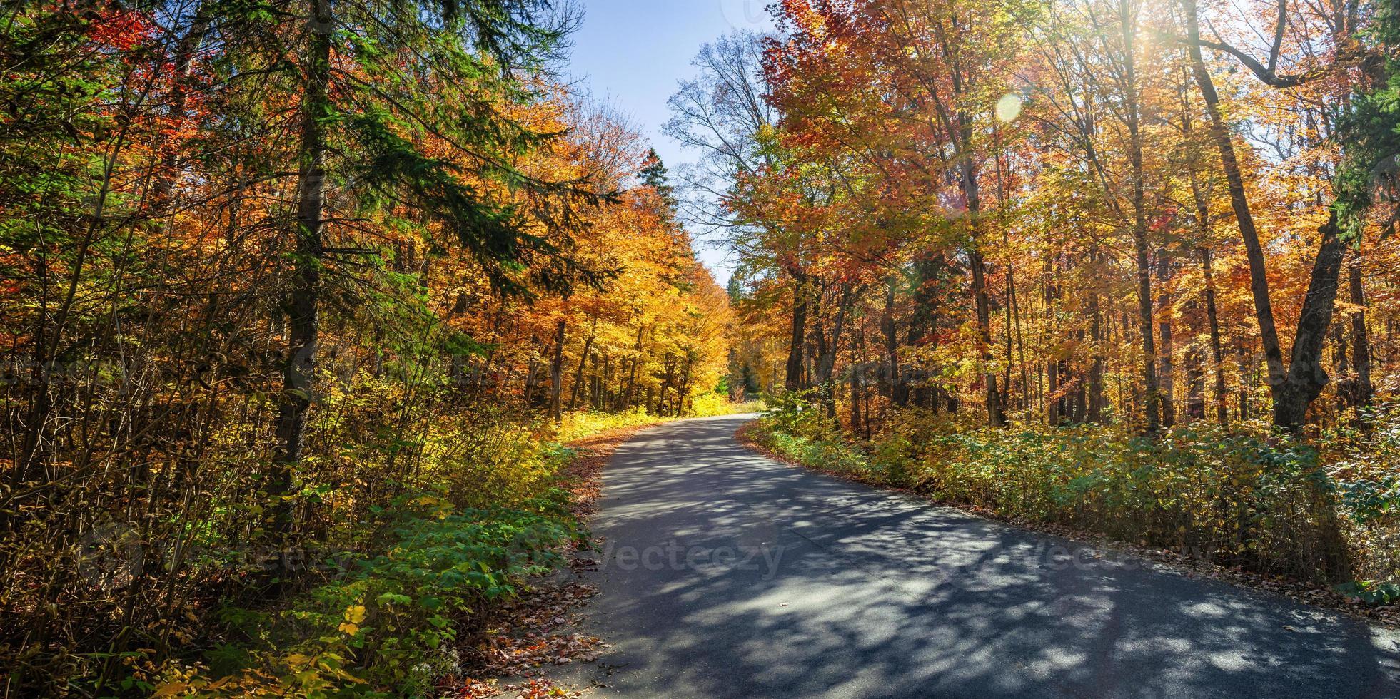 estrada na floresta de outono foto