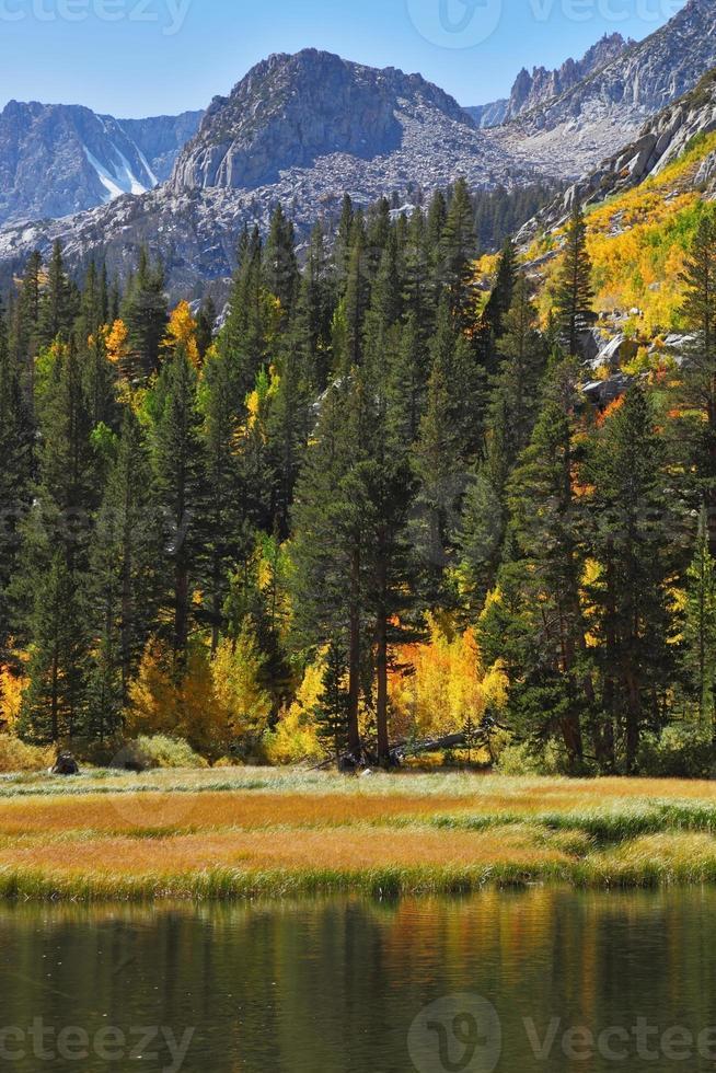 floresta de outono e céu azul foto