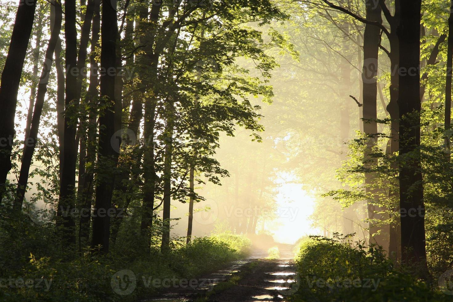 estrada de terra pela floresta foto