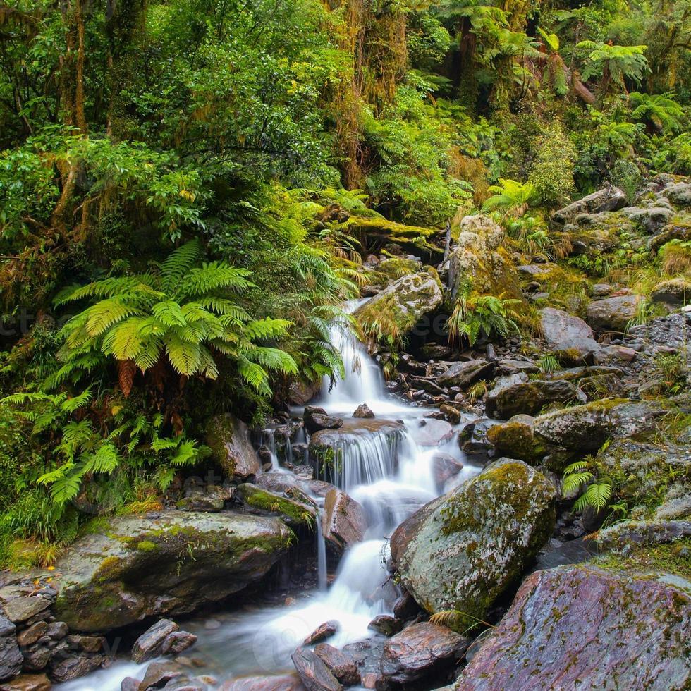 cachoeira na floresta tropical da nova zelândia foto