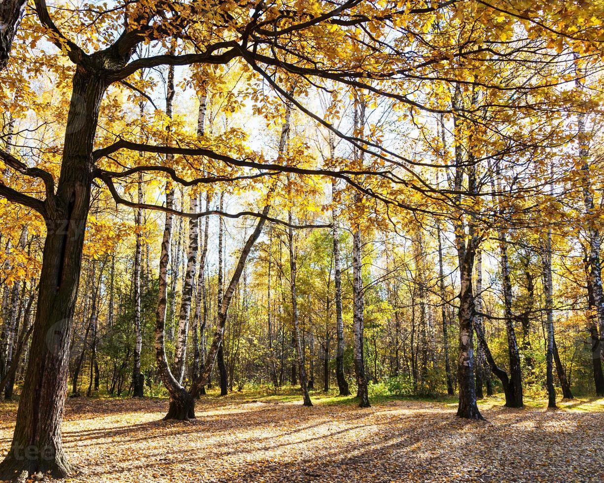 Prado em floresta de carvalho e bétula no outono foto