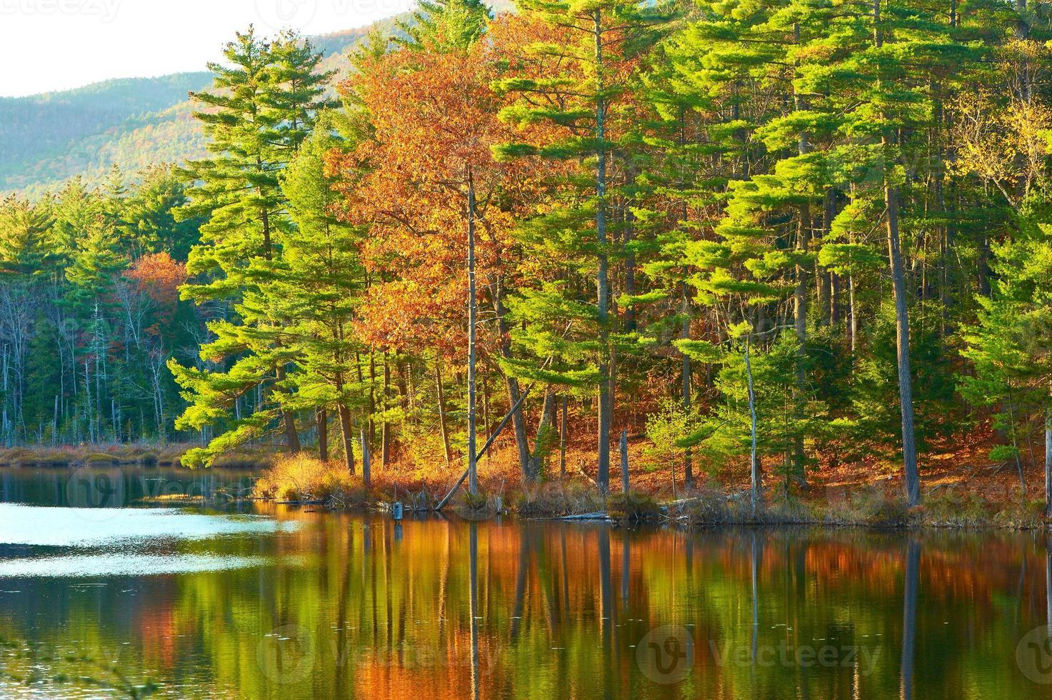 lagoa na floresta nacional de montanha branca, new hampshire foto