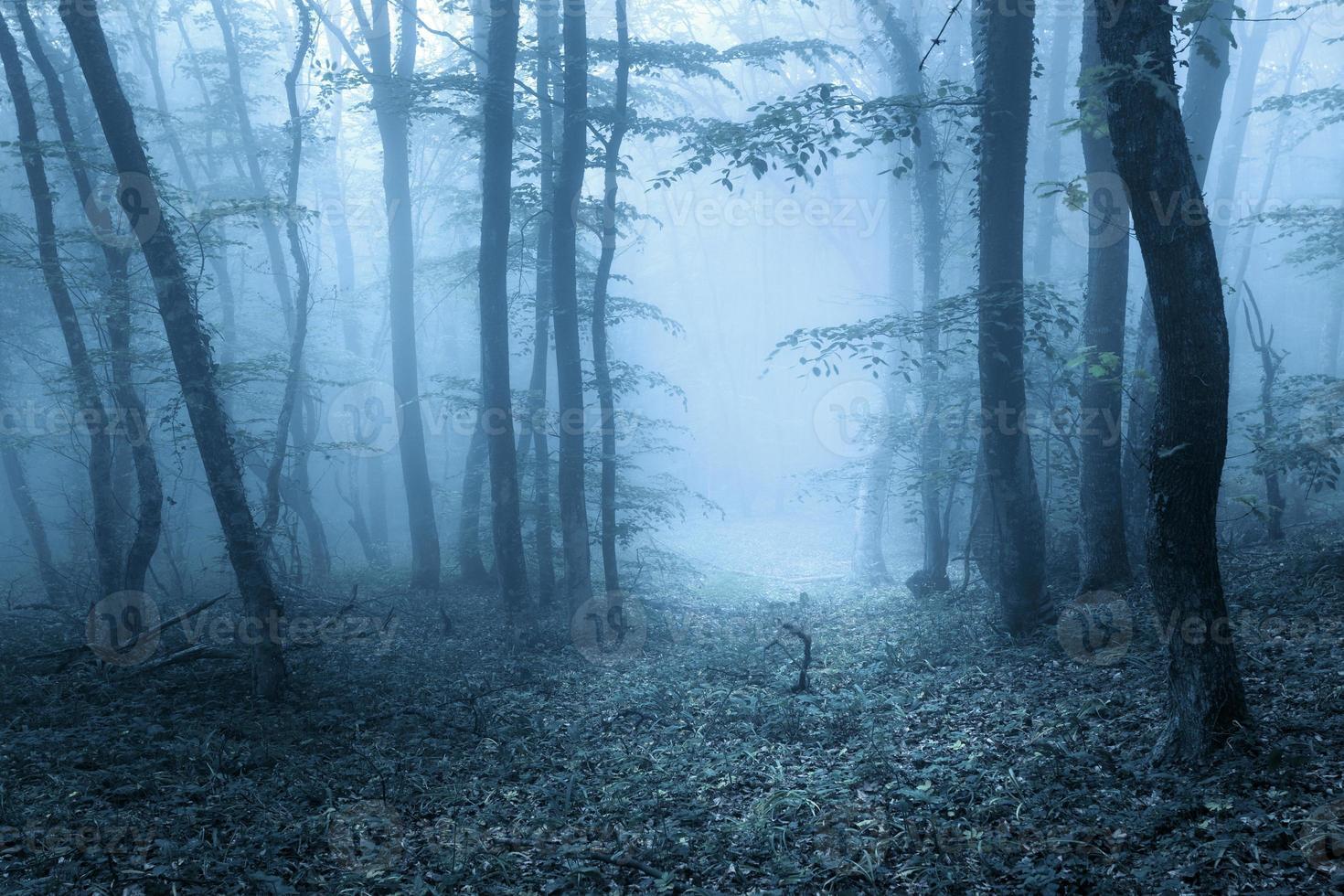 1320521-trilha-atraves-de-uma-misteriosa-floresta-escura-na-primavera-foto.jpg