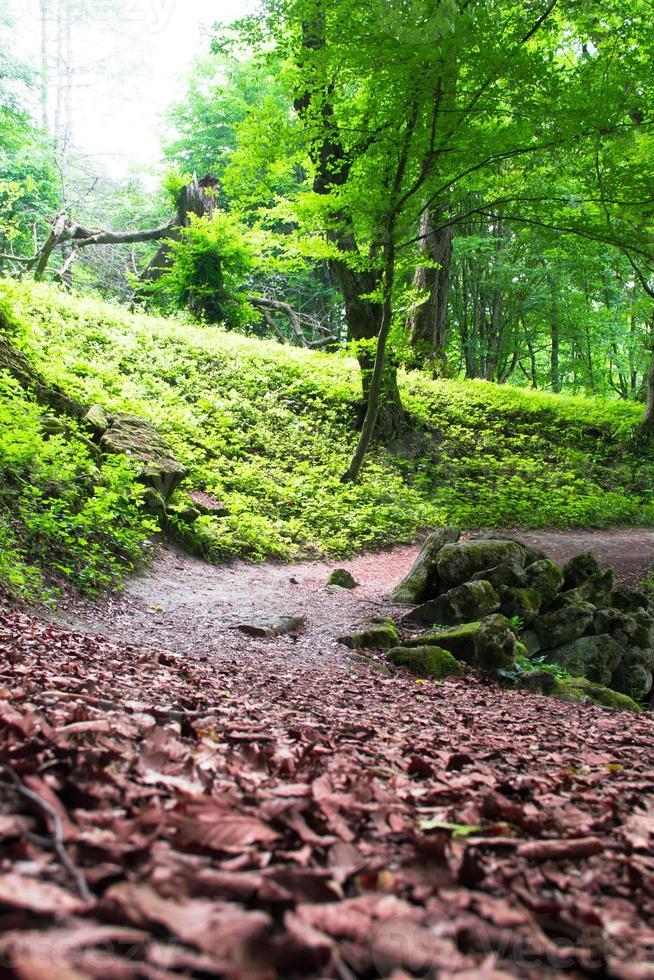 trilha por entre árvores altas em uma floresta exuberante foto
