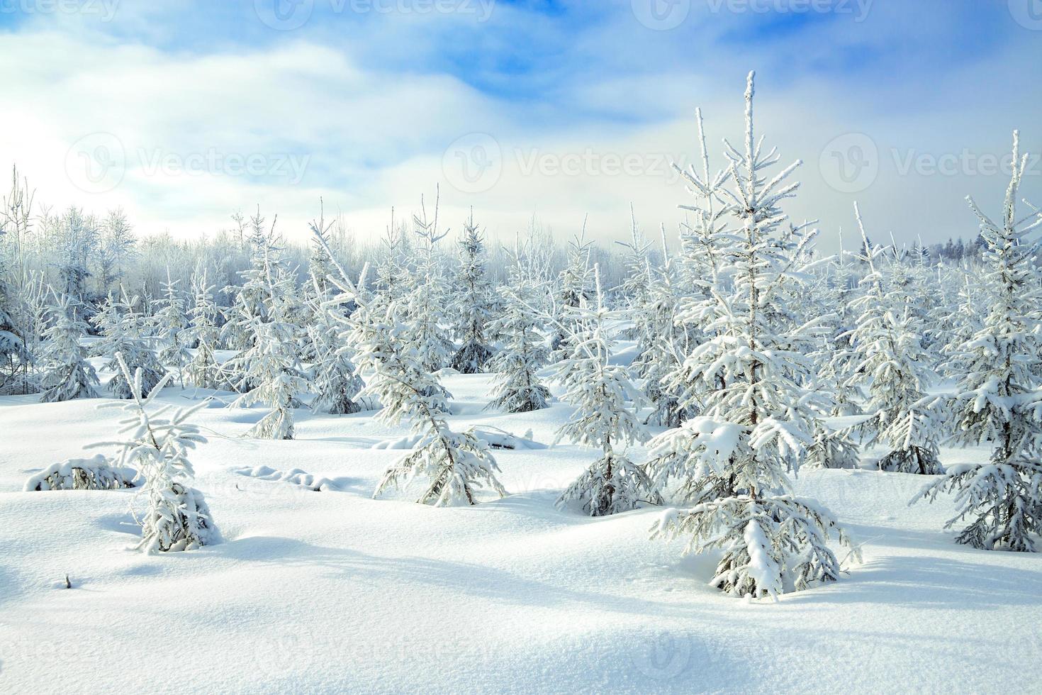 paisagem rural de inverno com a floresta e o céu azul foto