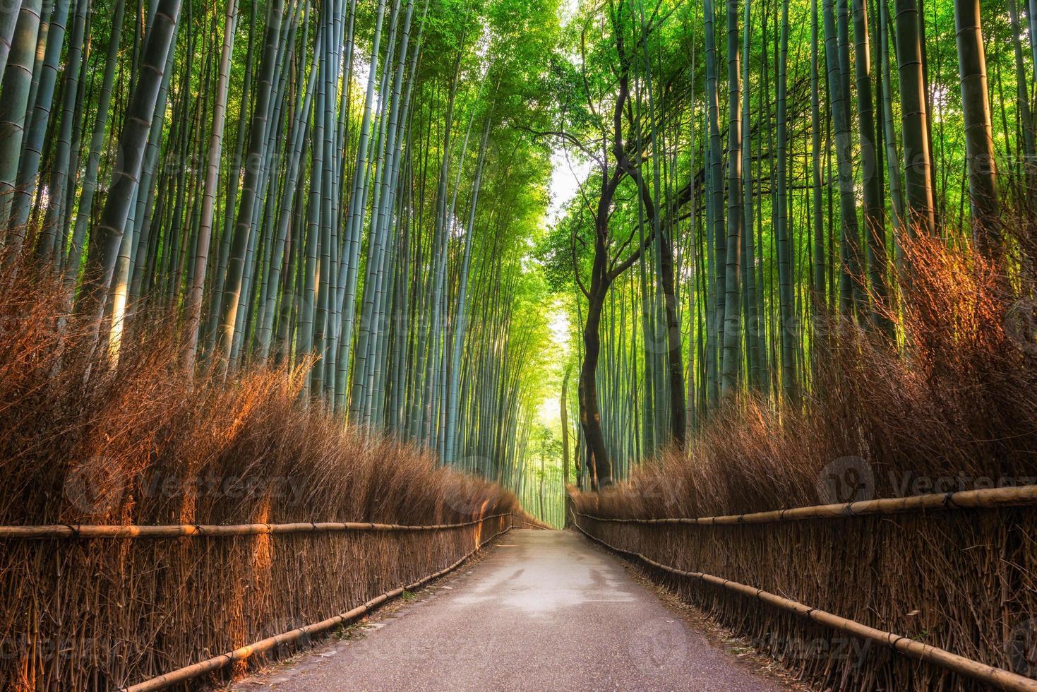 bosque de bambu arashiyama foto