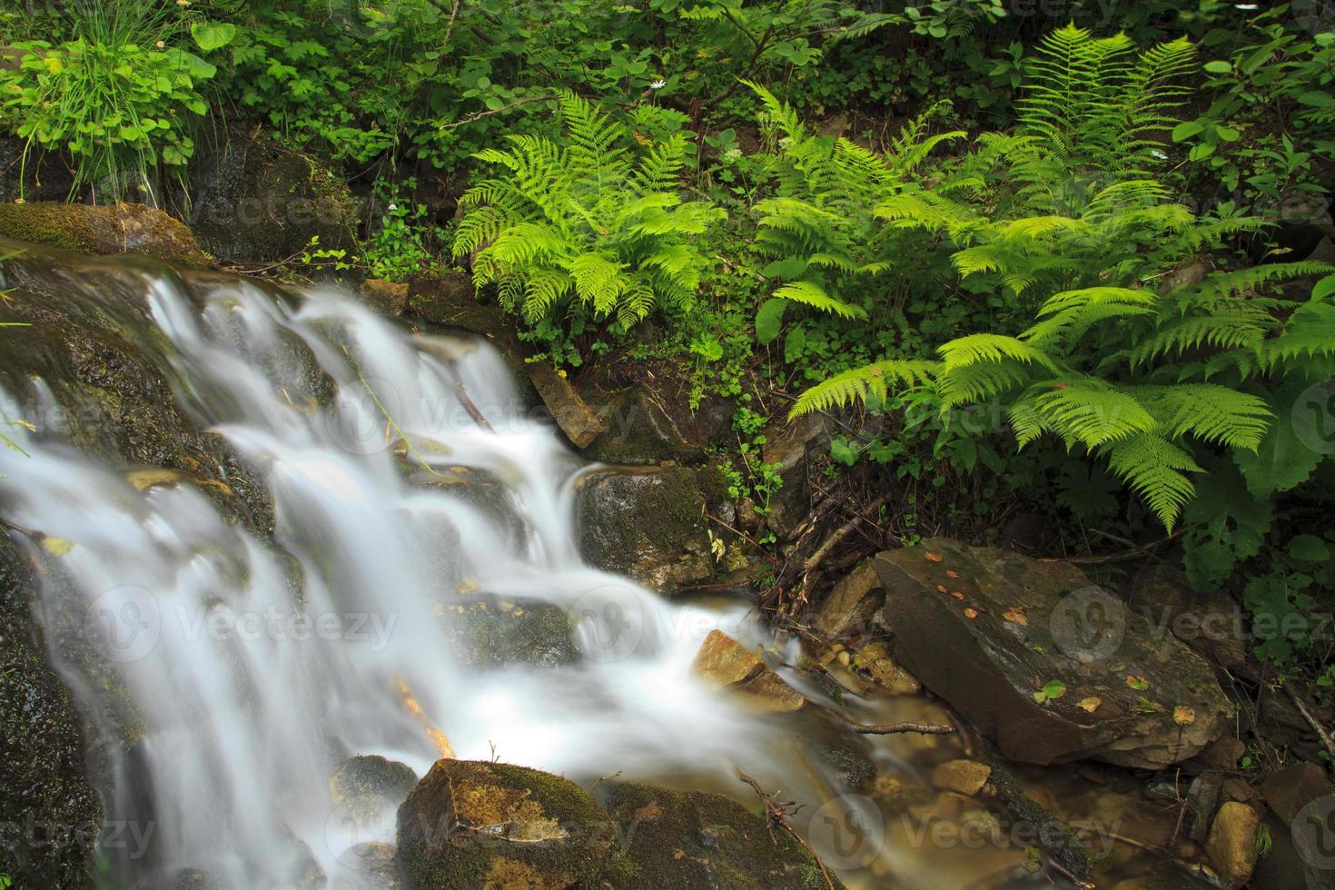 cachoeira no verão perto da samambaia foto