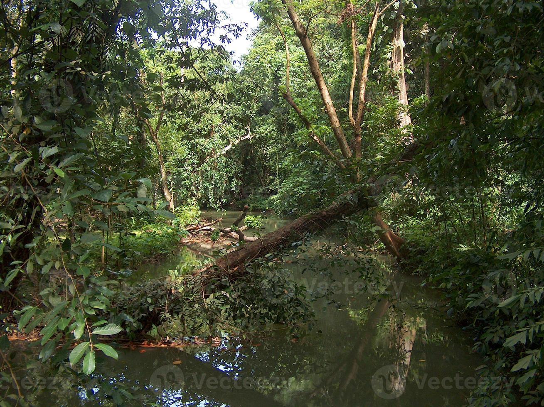 rio tropical em Krabi, ao sul da Tailândia foto