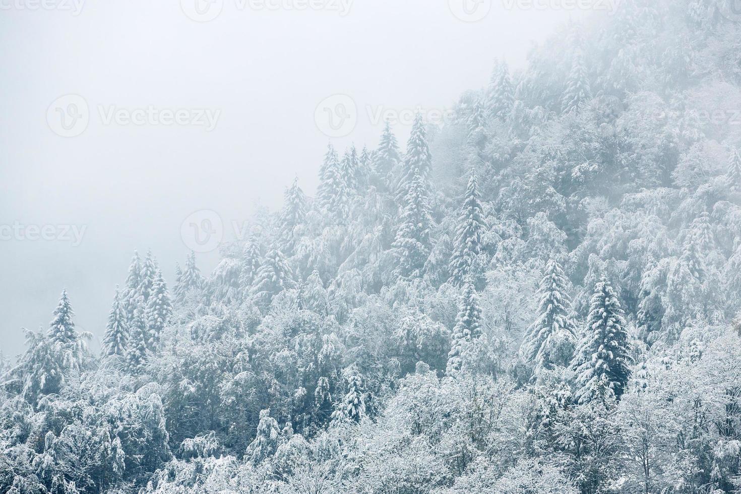 paisagem bonita do inverno com árvores cobertas de neve foto