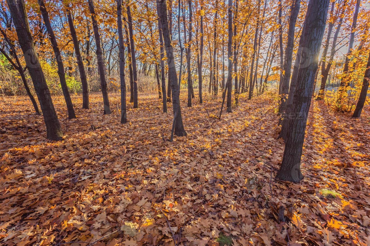 parque outonal. árvores e folhas de outono foto