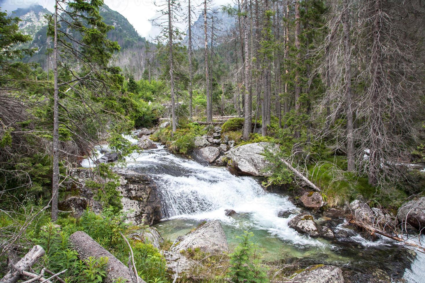 cascata in high tatras, eslováquia foto