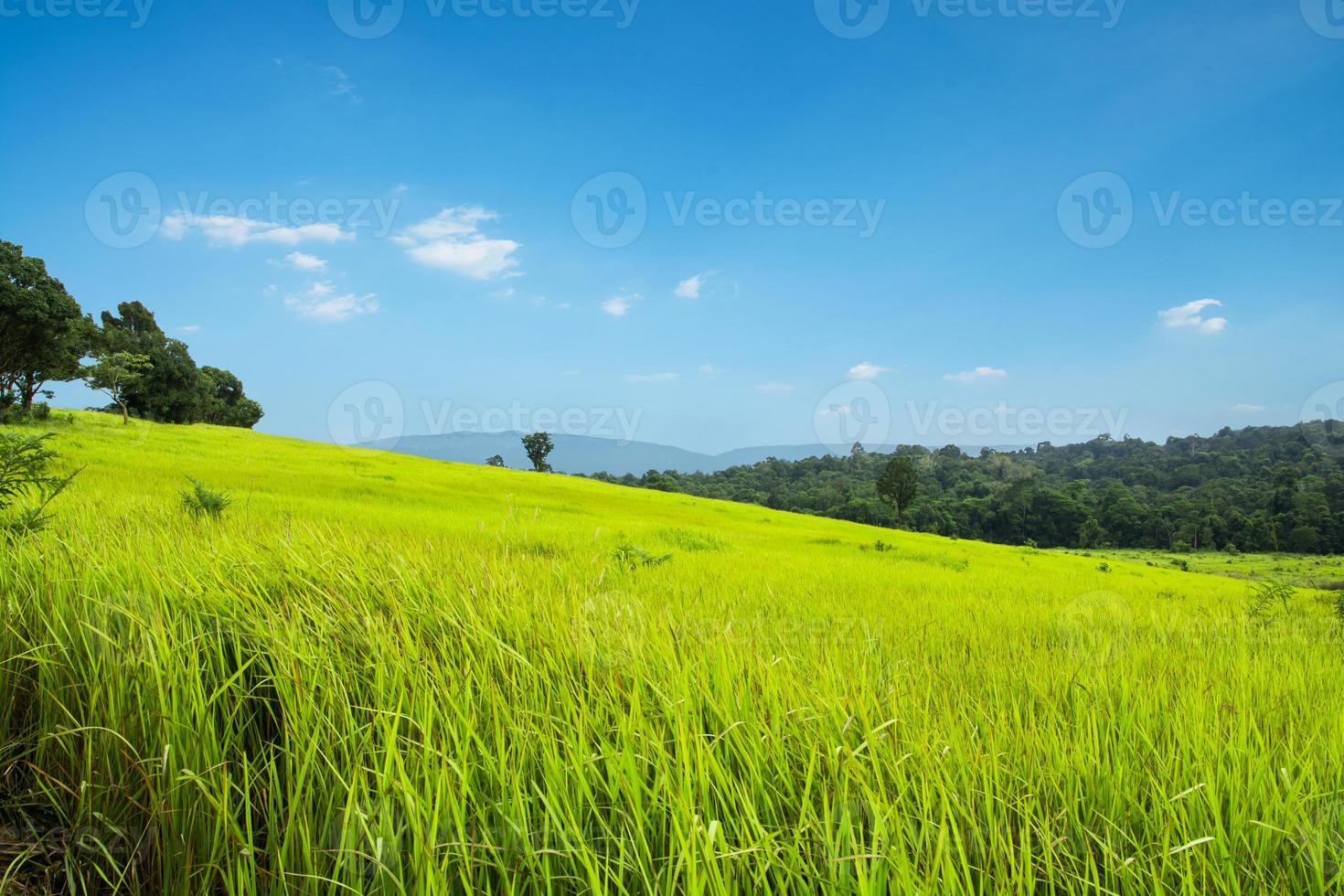 prado verde e montanhas foto
