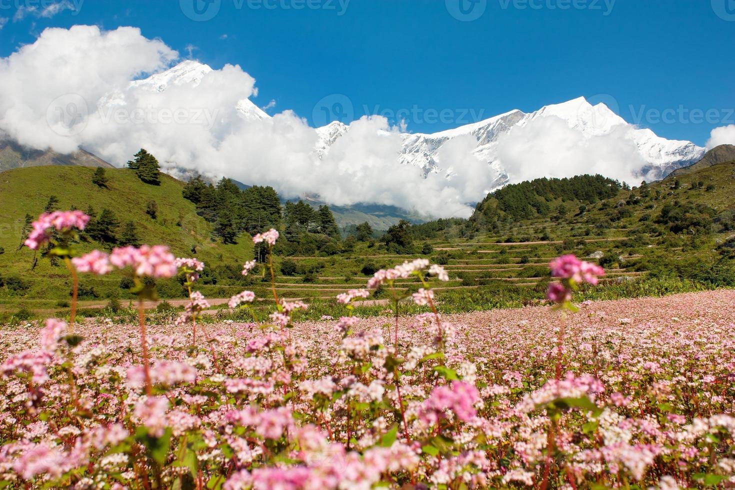 monte dhaulagiri com campo de trigo sarraceno foto