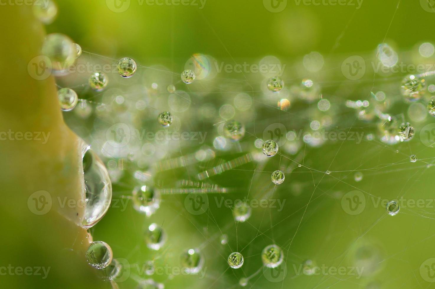 brilho do sol, gotas de orvalho em uma teia de aranha, dia ensolarado foto