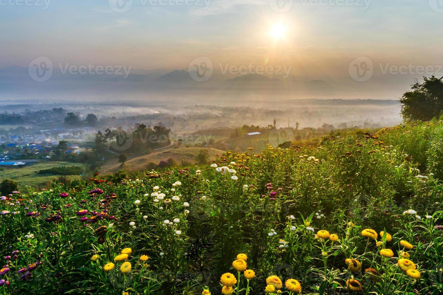nascer do sol, flores e montanha foto