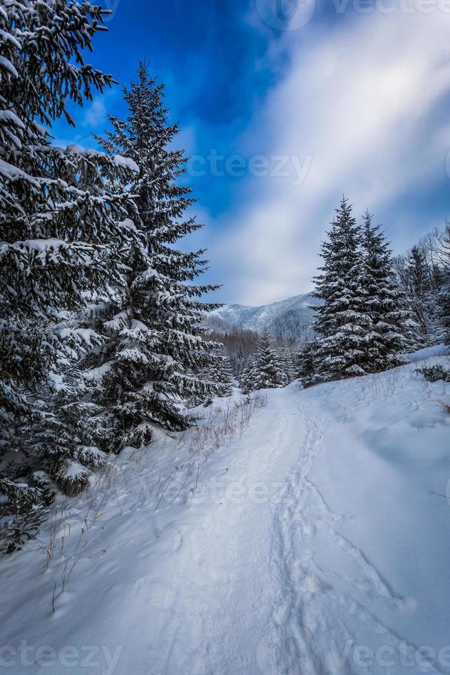 caminho de montanha coberto de neve entre as árvores foto