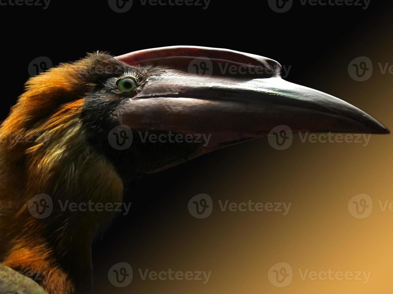 cabeça de pássaro foto