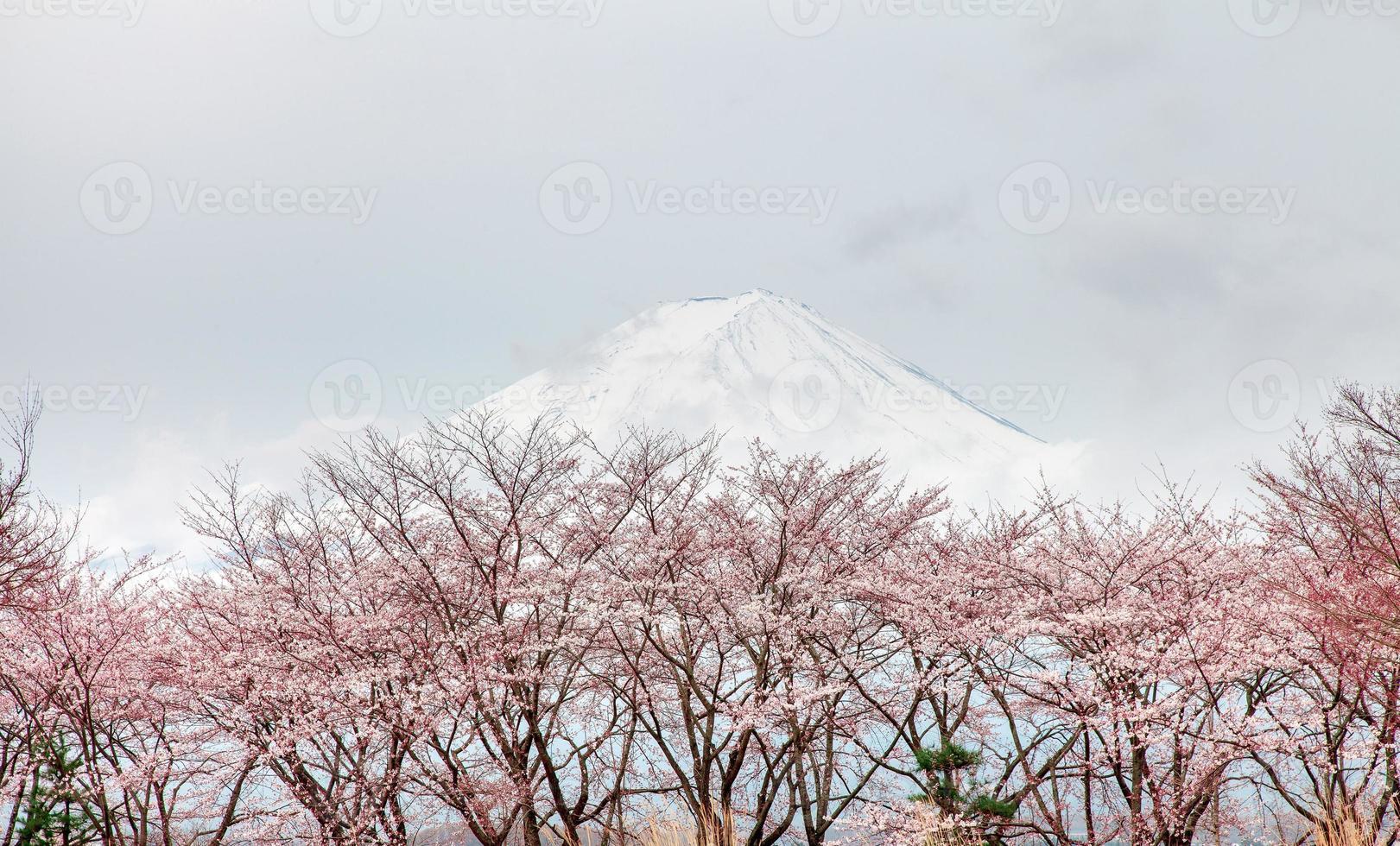 ญ pintar a árvore da flor de cerejeira na primavera no lago kawaguchi, no Japão foto
