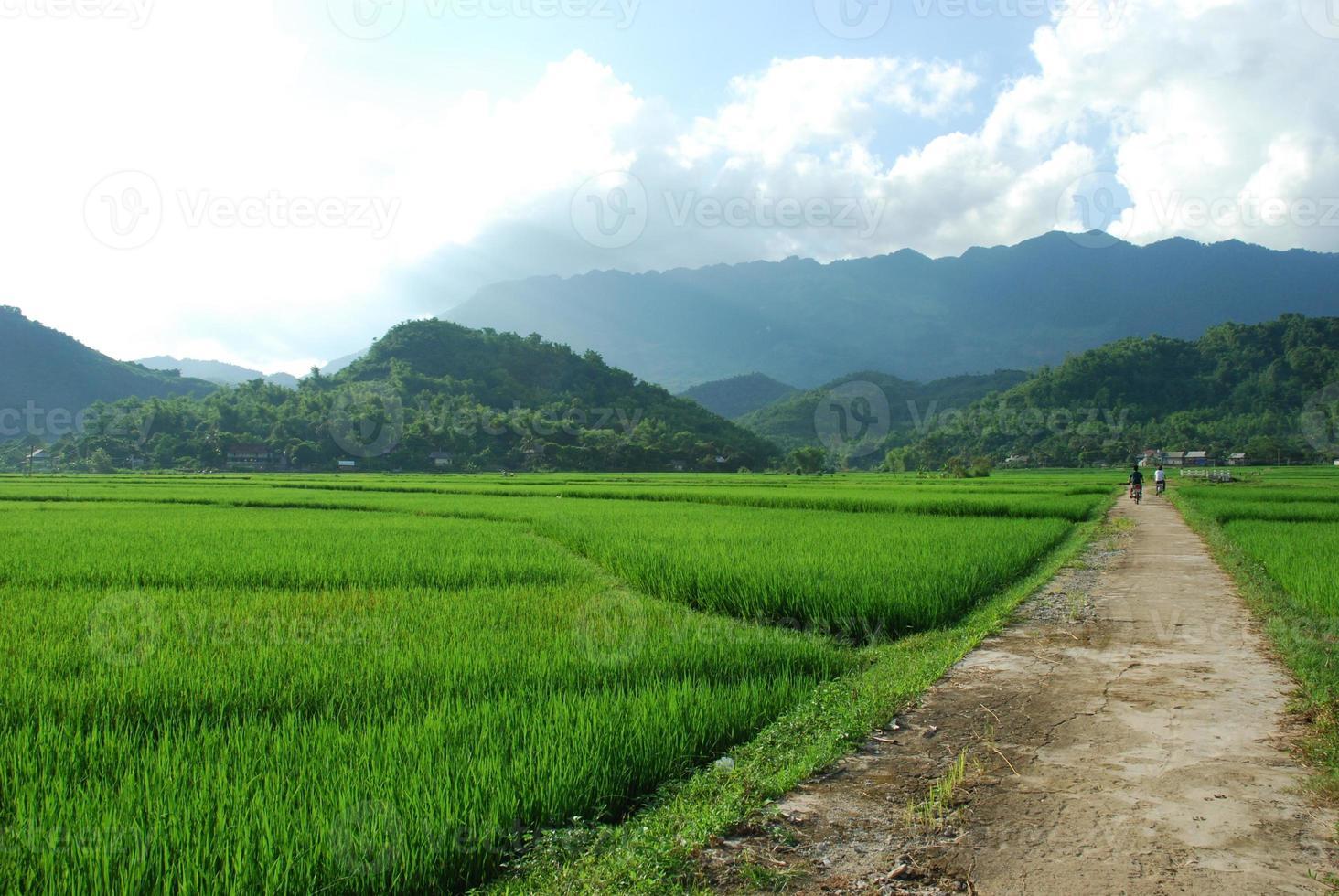 arrozal entre montanhas foto