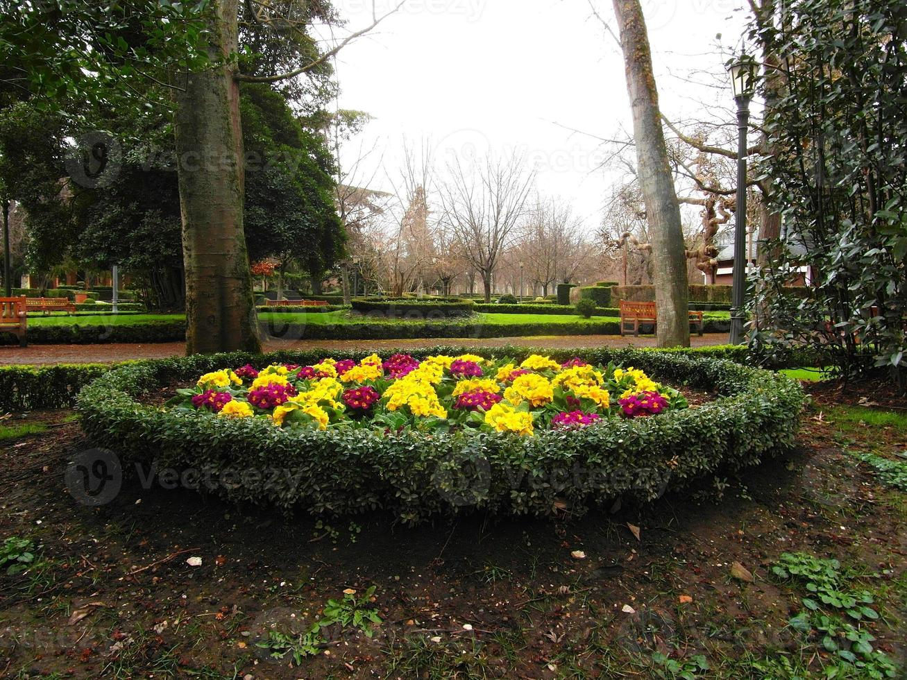 andar no parque perto das flores foto