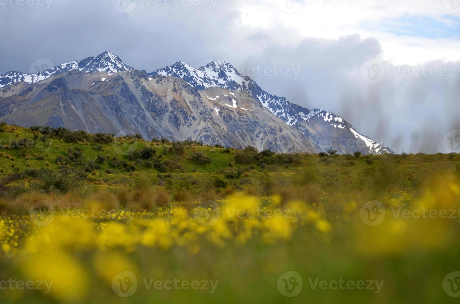 flores da montanha foto